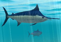 Atlantic Blue Marlin, click to download