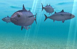 Bluefin Tuna, click to download