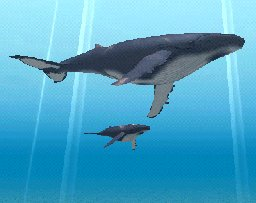 Humpback Whale Baby, click to download