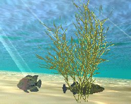 Hygrophila Plant, click to download