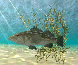 Kelp Plant, click to download