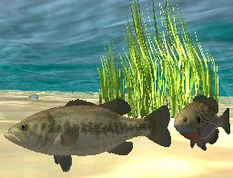 Largemouth Bass, click to download