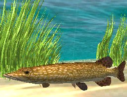 Northern Pike, click to download