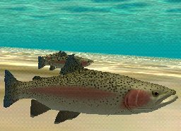 Rainbow Trout, click to download