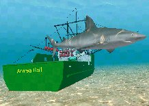 Sandbar Shark, click to download