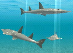 Shovelnose Guitarfish, click to download