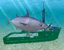 Skipjack Tuna, click to download