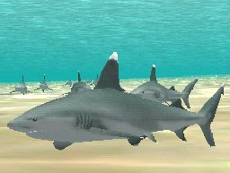 Whitetip Shark, click to download