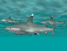 Whitetip Shark with Sharksucker, click to download