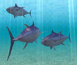 Yellowfin Tuna, click to download